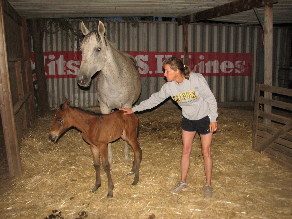 Our new filly!