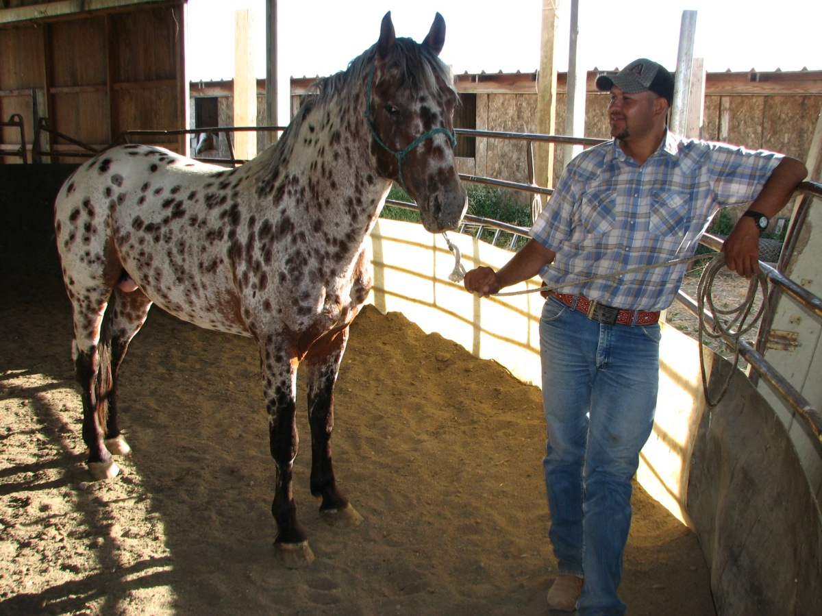 Our brown-spotted stallion