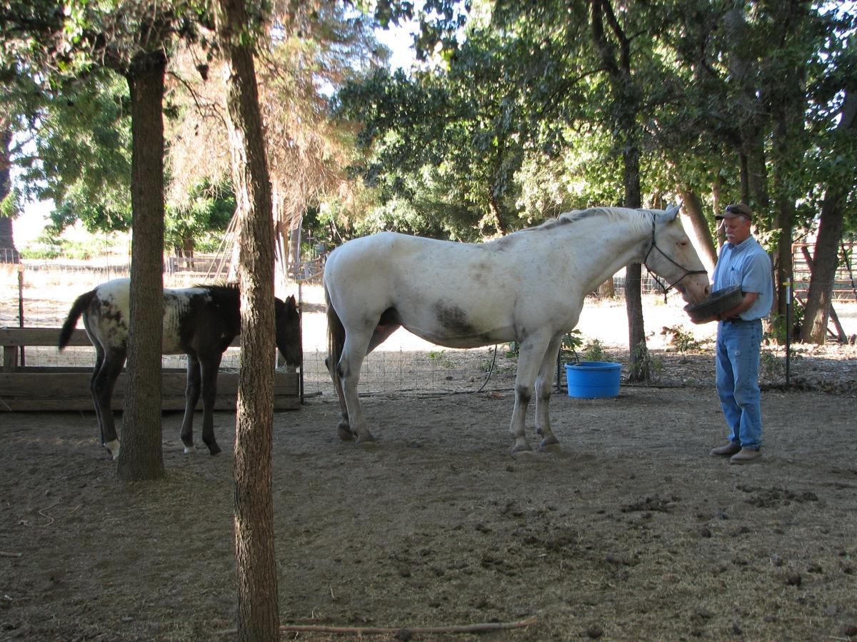 Horses need homes